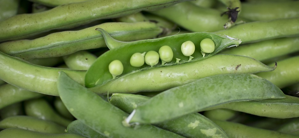 Peas and broad beans