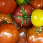 tomatoes-main