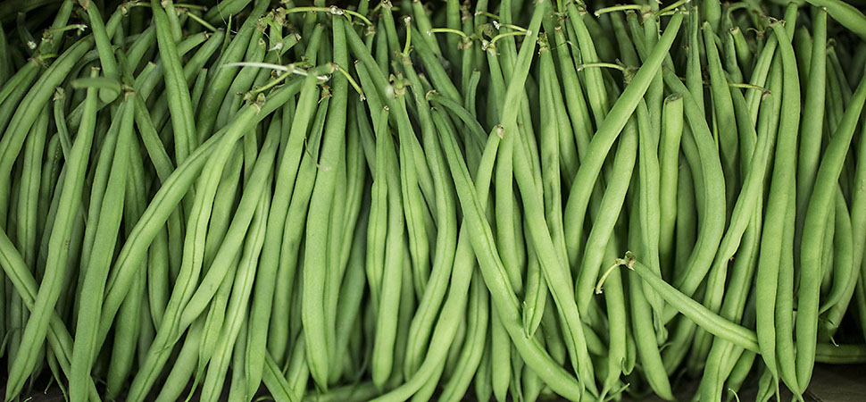 Bobby beans