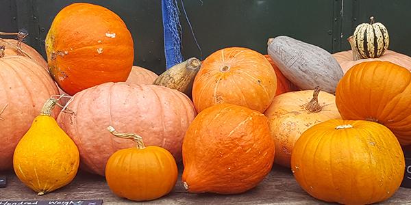 Pumpkin selection